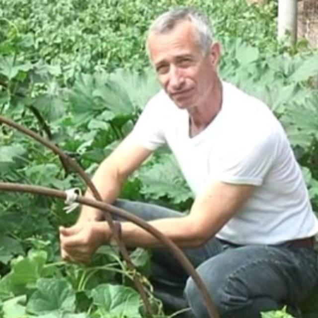 Как лечить геморрой огурцом: полезные свойства овоща, метод доктора Попова и его особенности, теоретическое обоснование автора
